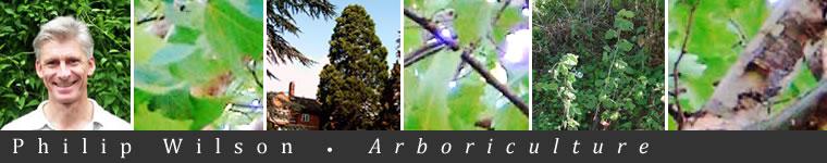 Philip Wilson Arboriculture - banner